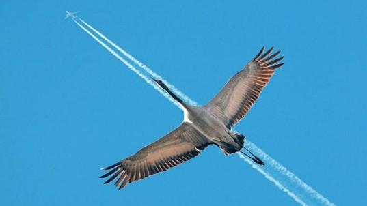 Abstract-Bird-Vs-Aeroplane-wide-wallpaper-full-screen-for-desktop-background-image-free